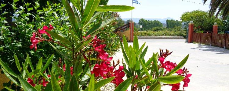 Skyline Corfu